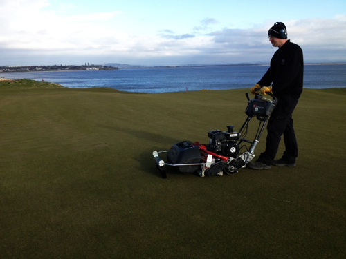 Brushing and cutting greens