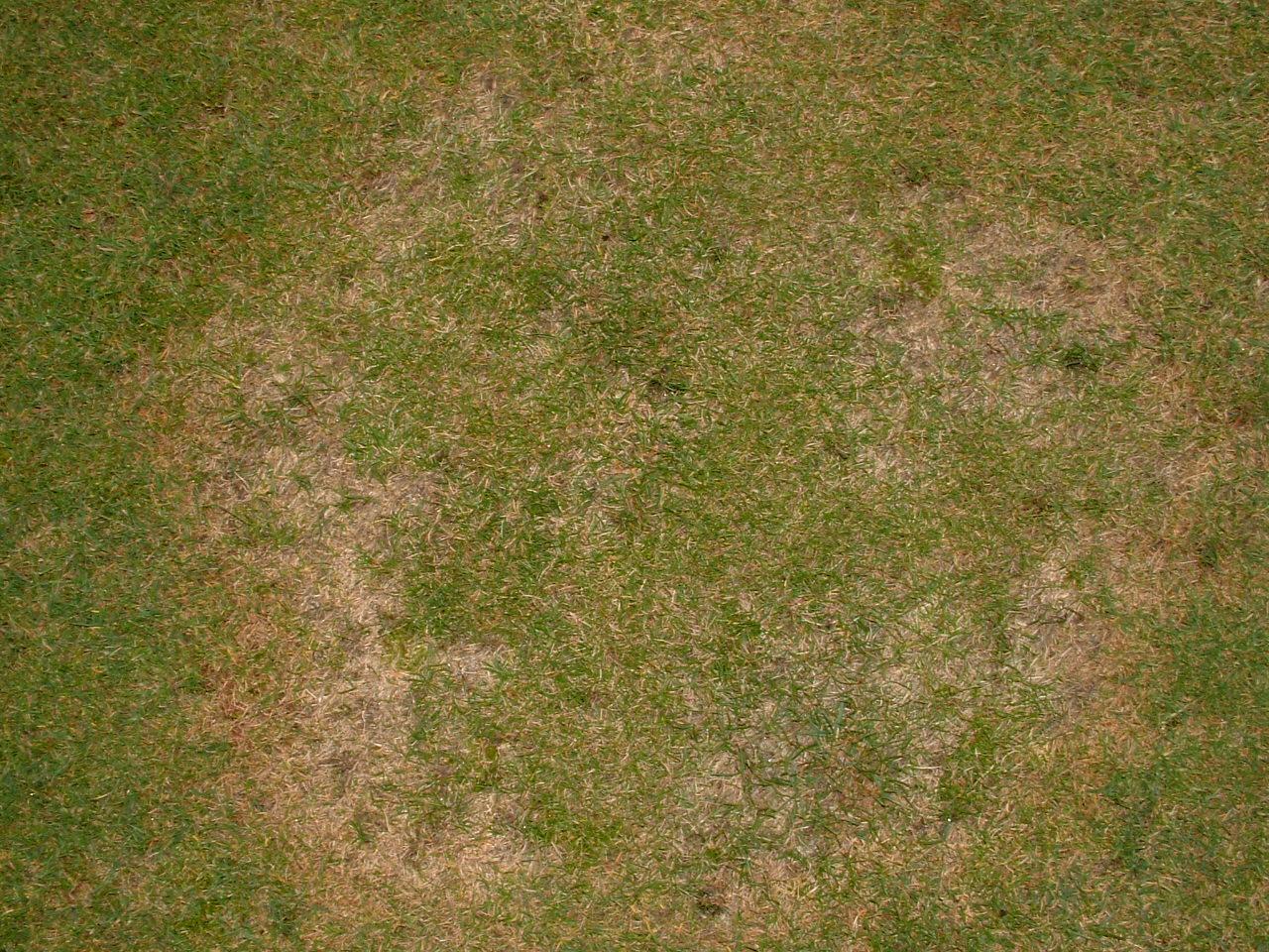 Soil Grass Texture | www.pixshark.com - Images Galleries ...